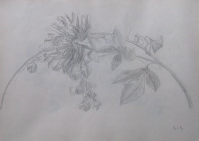 Sketche (2)