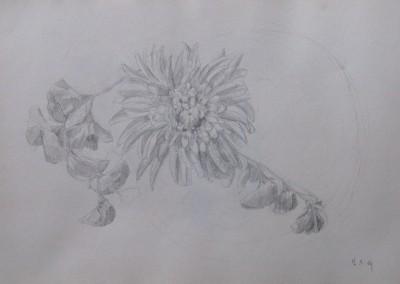 Sketche (3)